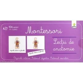 LECȚII DE ANATOMIE - ORGANELE INTERNE - MONTESSORI